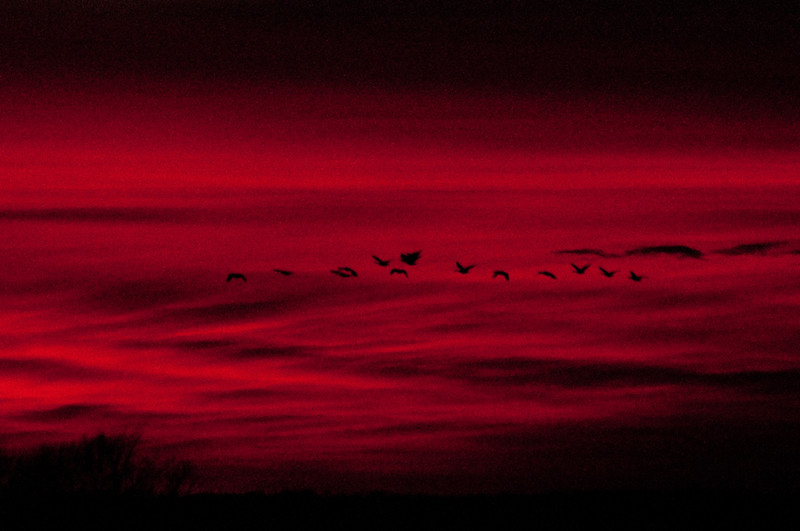 ac-Night Time_ Geese At Sunset