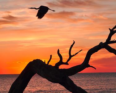 nc-Sunrise Bird