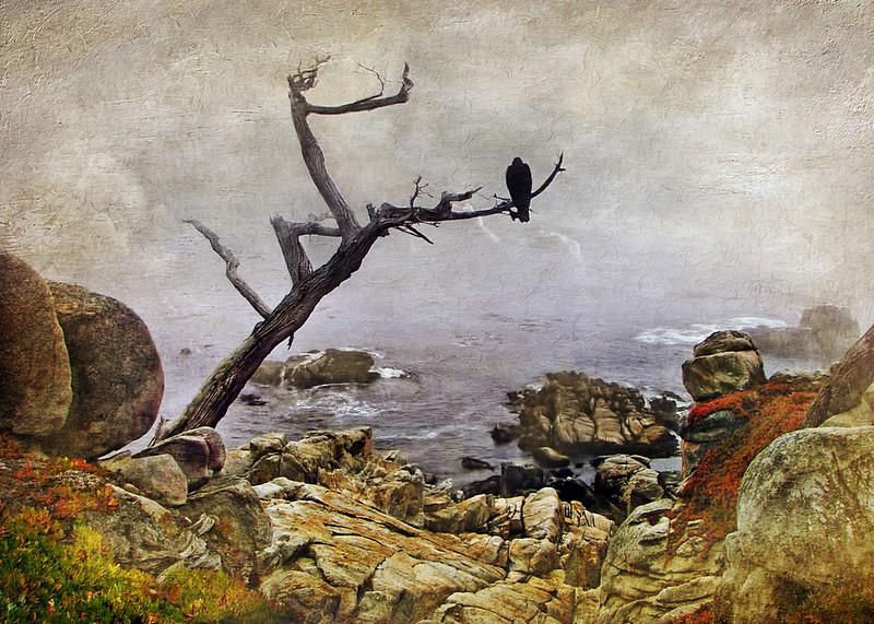 ag-Monterey Mist
