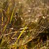 ac-Spiderweb
