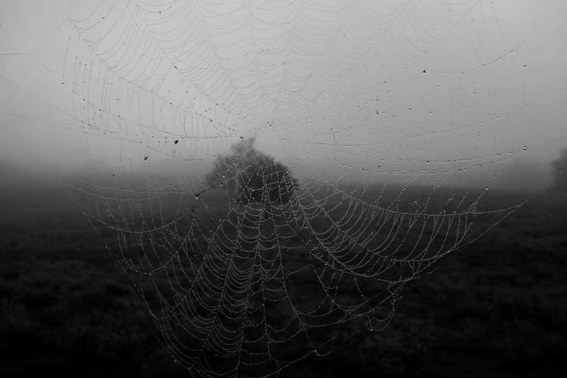 nm-Spider Web On Foggy Morning