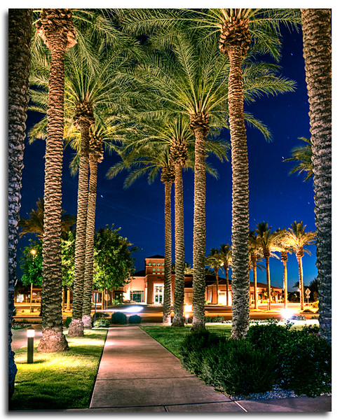 ac-Night Time_ Palm Trees In A Row