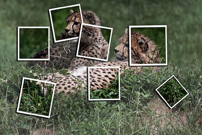 ag-Cheeta Viewer