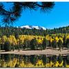 nc-Fall Aspen