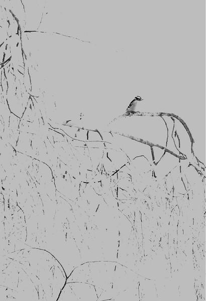 ag-Birdonbranch