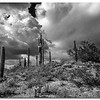 nm-Stormy Weather 1st Don Loeske.jpg