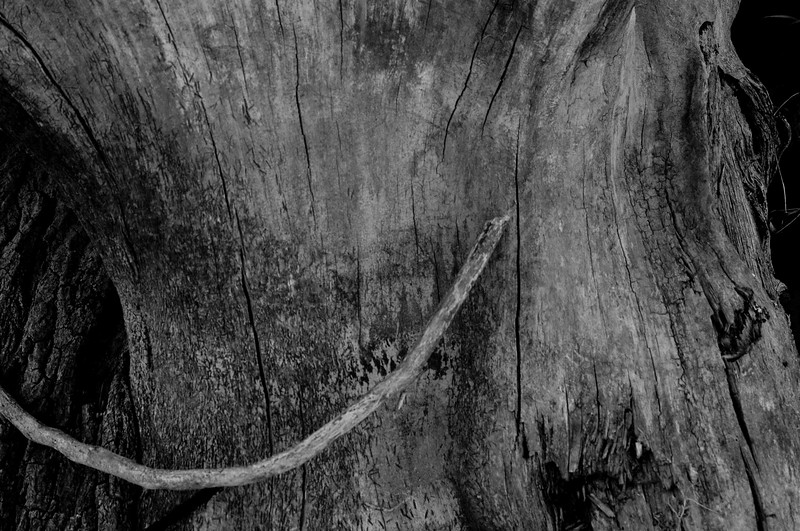 nm-Tree Trunk Texture 2nd Nancy Oudheusden.jpg