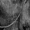 nm-Tree Trunk Texture 2nd Nancy Oudheusden.jpg