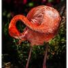 nc-Flamingo
