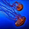 nc-Creatures Of The Deep by Gary Prill 1st.jpg