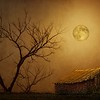 ag-Moonglow Over Polenz Ranch by Nikki McDonald 1st