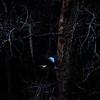 ac-Heron At Night