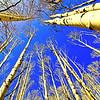 nc-Aspen Forest