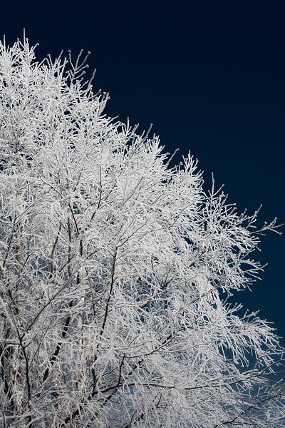 oc-Frosty Tree tie 3rd Gary Prill.jpg
