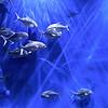 nc-Silverfish