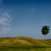 nc-The Tree On The Hill