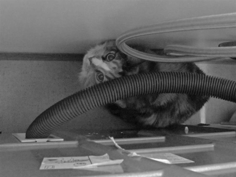 pm-Behind The Dryer 1st Paul Evans.jpg