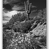 nm-Saguaro by Don Loeske 1st.jpg