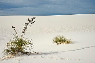 n-white sands yucca 1st Steve Barker
