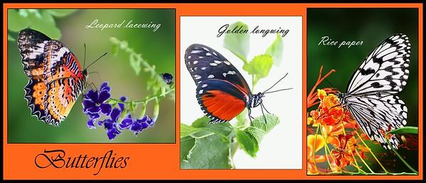 ag-butterfly triptych 2nd Nikki McDonald.jpg