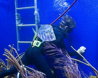 p-aquarium maintenance 3rd Larry Cameron.jpg