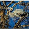 n-blue heron