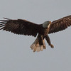 n-bald eagle lake superior
