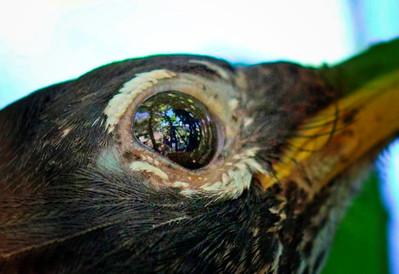 n-birds eyeview