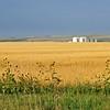 o-golden fields