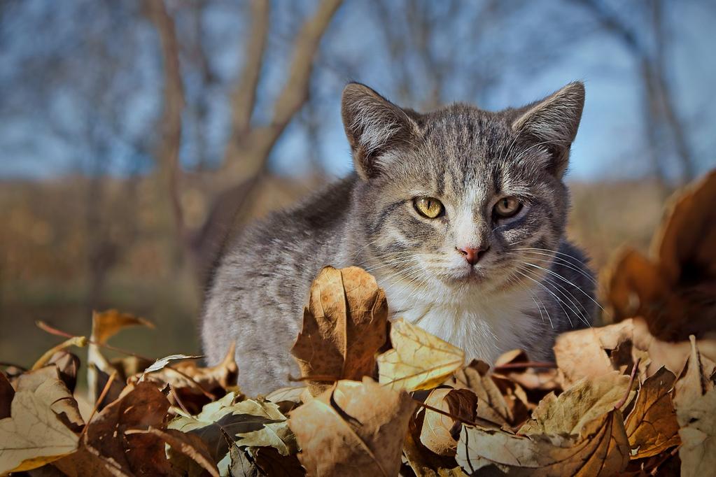 A - Farm Cat in Fall 1st Nikki McDonald