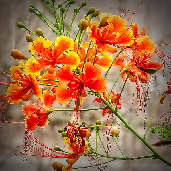 A - Spring into Orange 1st Gary Prill