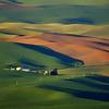 T - Palouse Farms #1-Washington 1st Nikki McDonald