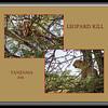 C - Leopard Kill