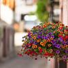 A - Flower Bokeh