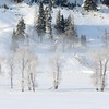 C - Lamar_Valley_Trees_1