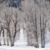 C - Lamar_Valley_Trees_2