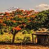 T - Mt Kilamanjaro