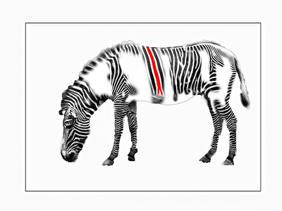 ic-How Not To Paint A Zebra