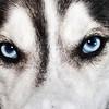 oc-Killer Blue Eyes