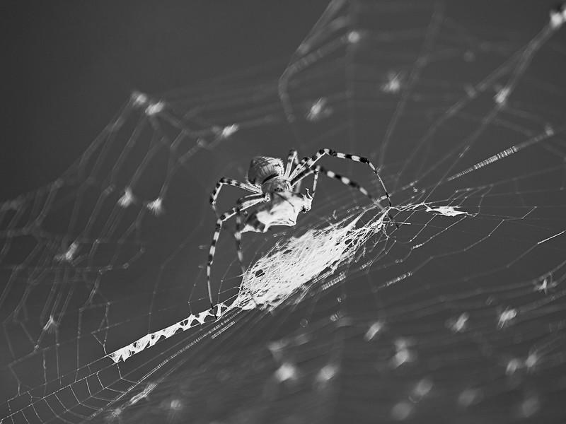 nm-Spiders Kill