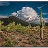 T(3) Don Loeske Saguaro Near Peoria  AZ