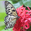 Paper Kite Eating Flower Nectar