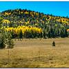 Aspen - Flagstaff AZ