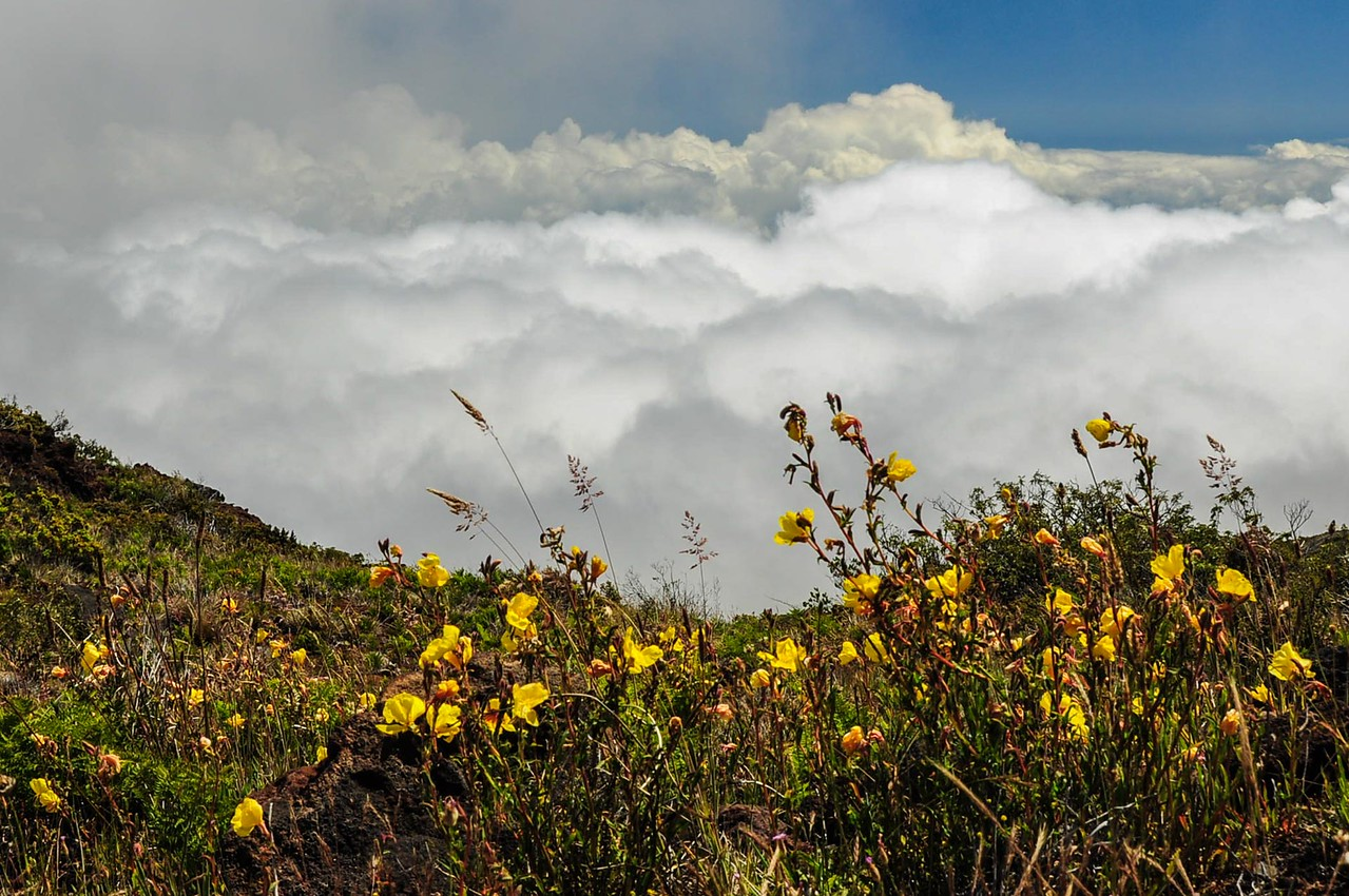 Blooming Above the Clouds