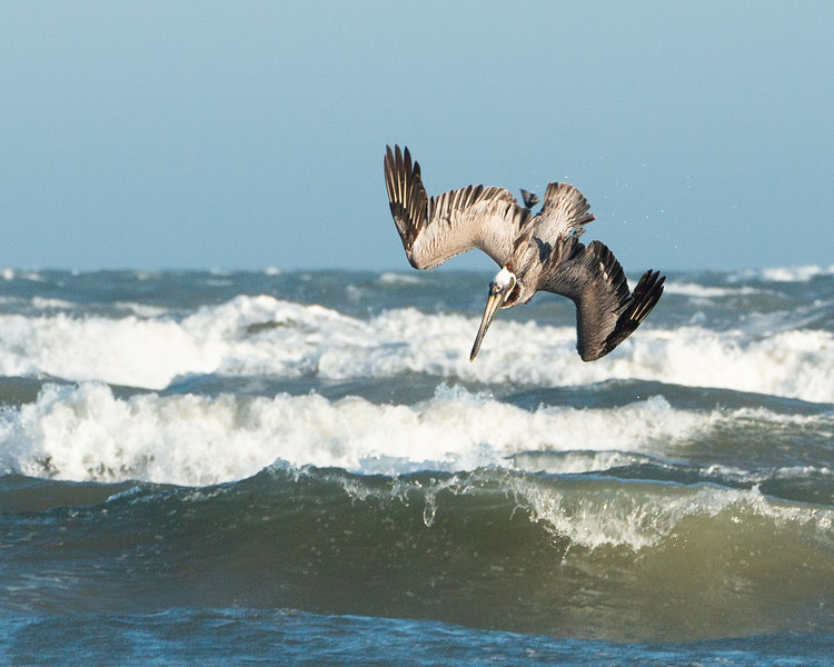 Pelican Fishing  -  Donna Turner  -  Third Place