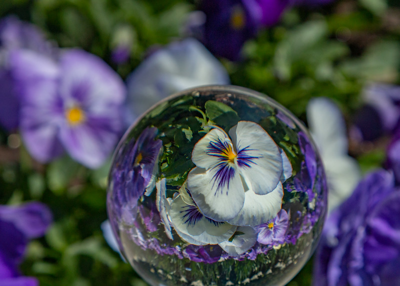 Crystal Ball Flowers  - Donna Turner  -  Second Place