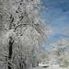 N - Winter Wonderland