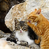 A(3) - Sibling Love in Paleochora 2