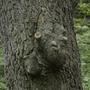 Face in the Tree  -  Craig Neidbalski