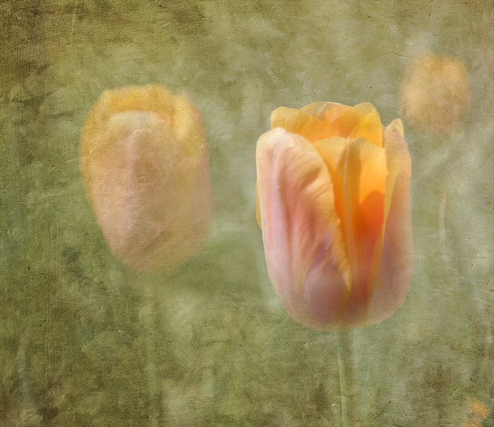 Tiptoe Through the Tulips  -  Donna Turner